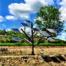 Un árbol solar es el diseño de un sistema fotovoltaico que imita a la flora, o que en pocas palabras imita la vida
