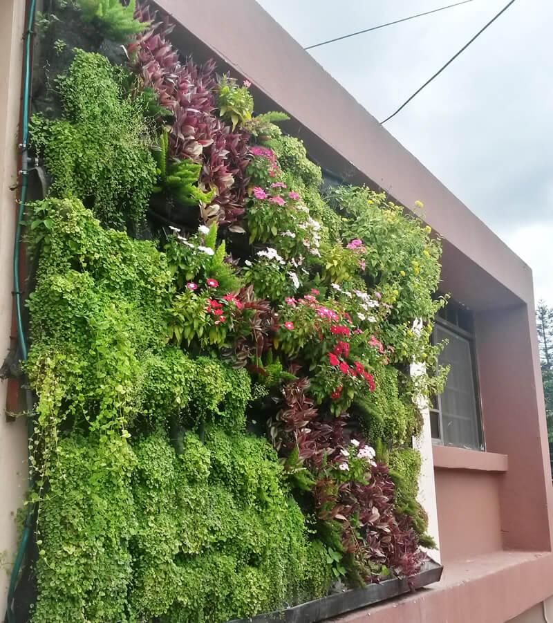 Pared verde proteger proteger - Proteger paredes de rozaduras ...